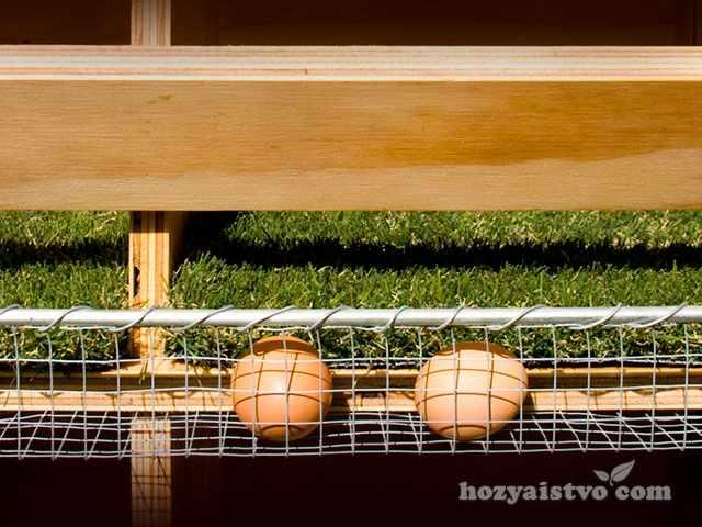 Гнездо с яйцесборником для кур