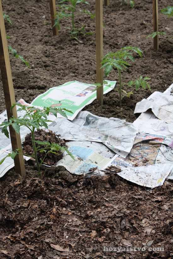Газеты способ избавиться от сорняков