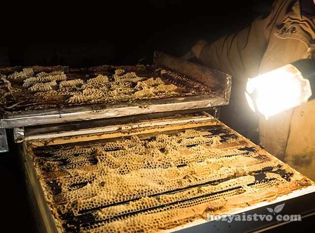 Осмотр пчелиных семей во время зимовки