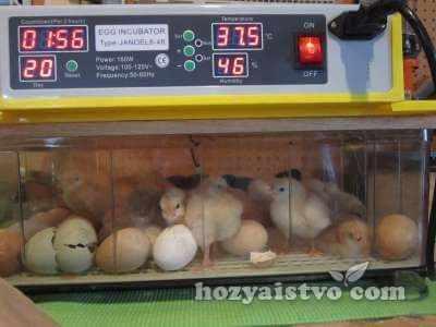 incubator janoel 8 48