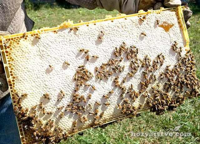 Пчеловодство в Израиле