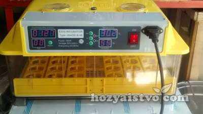 incubator yellow