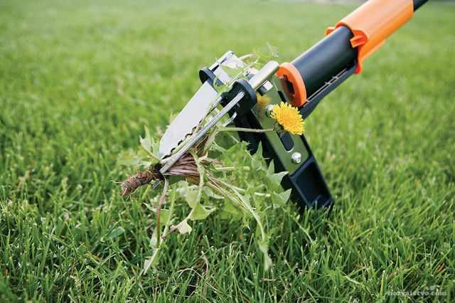специальный инструмент для удаления сорняков