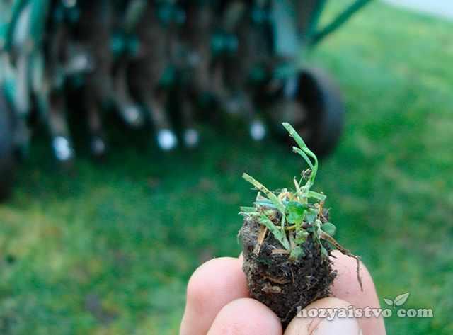 Удобрение и уход за травой