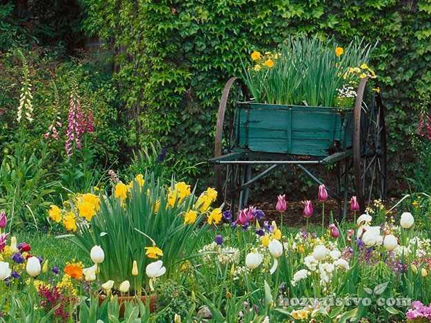 Композиция нарциссы в саду