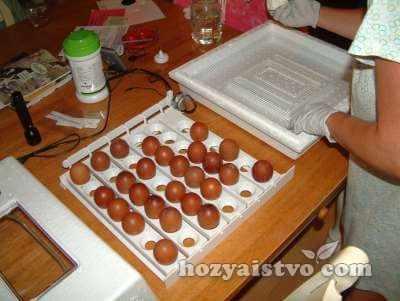 sborka incubatora