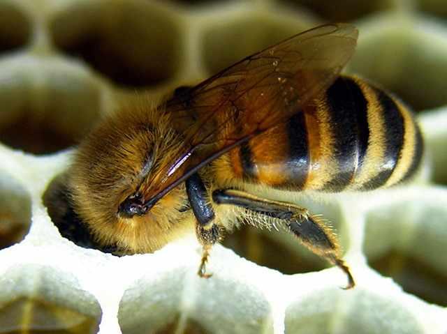 Новые технологии пчеловодства