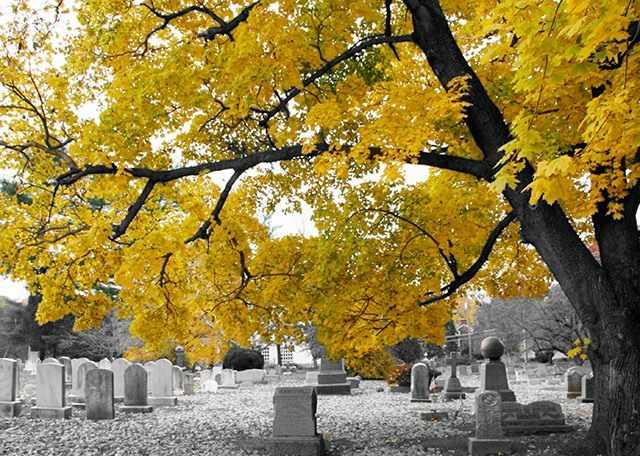 Озеленение кладбища