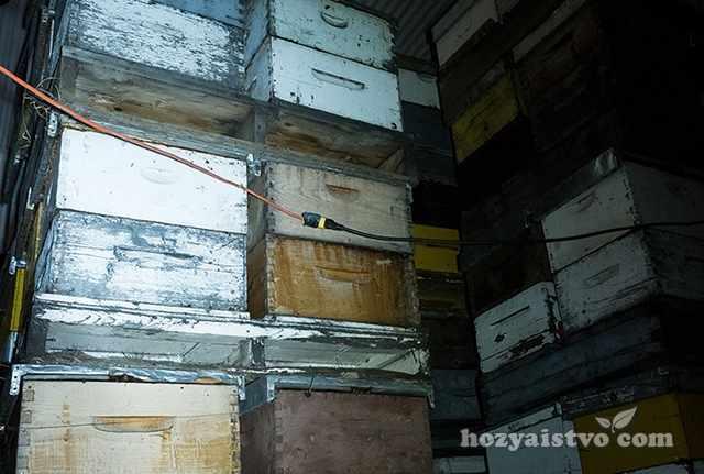 Зимовка пчел в помещении