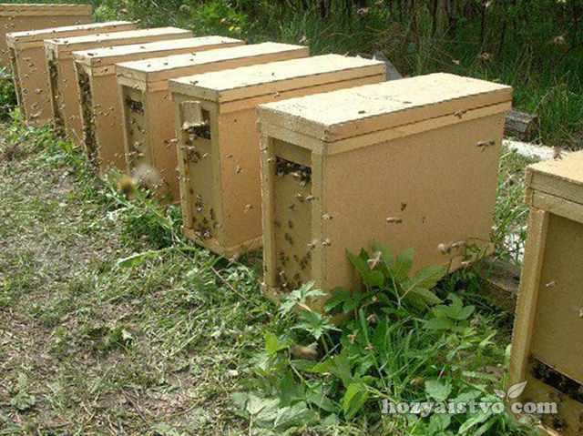 Пчелопакеты для пасеки