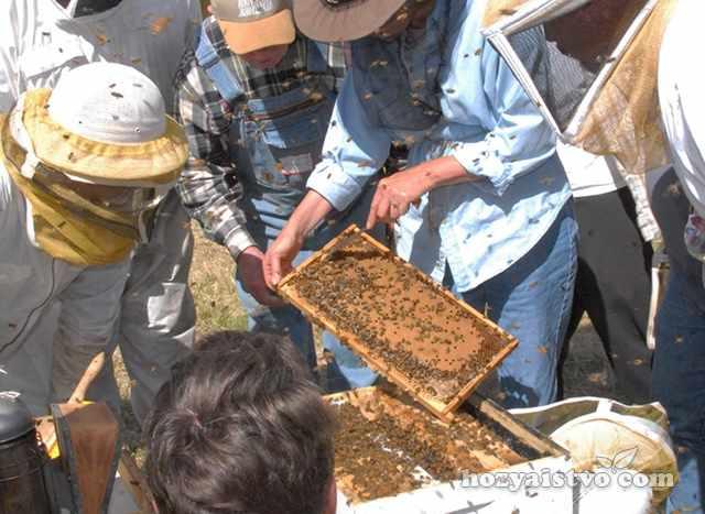 Стимуляция развития пчелиной семьи