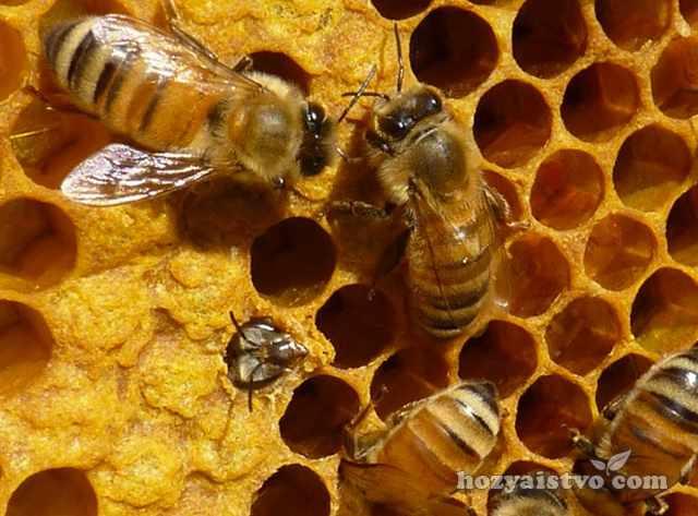 Состояние пчел по сотам