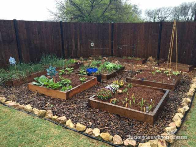 выбор растений для засушливых почв