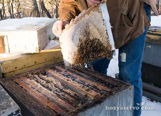 Осмотр пчел после зимовки