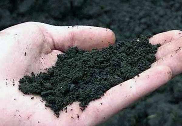 Подготовка почвы под посадку овощных культур