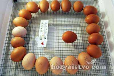 egg with termometer