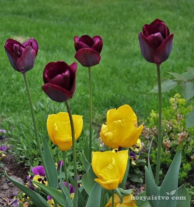 Многоярусная посадка цветов