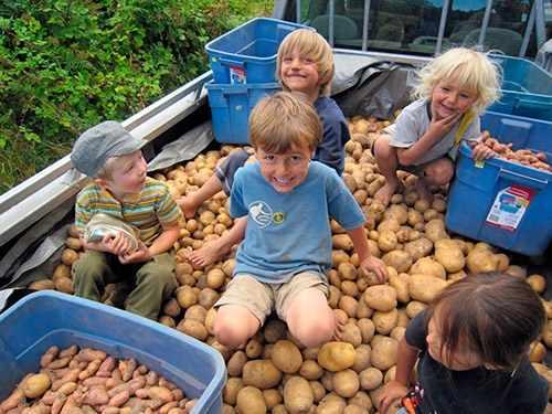 Советы по уходу за картофелем