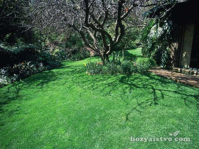 газон all seasons