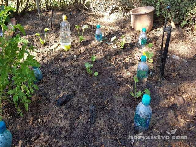 Орошение засушливой почвы