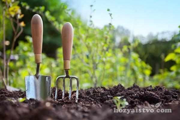 инструменты для борьбы с сорняками