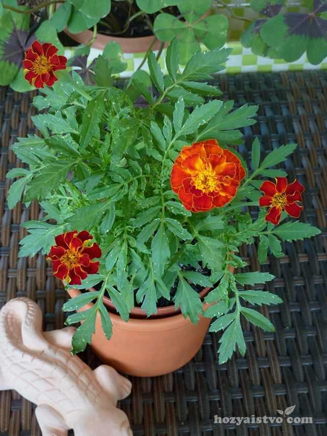 Цветы в контейнере осенью