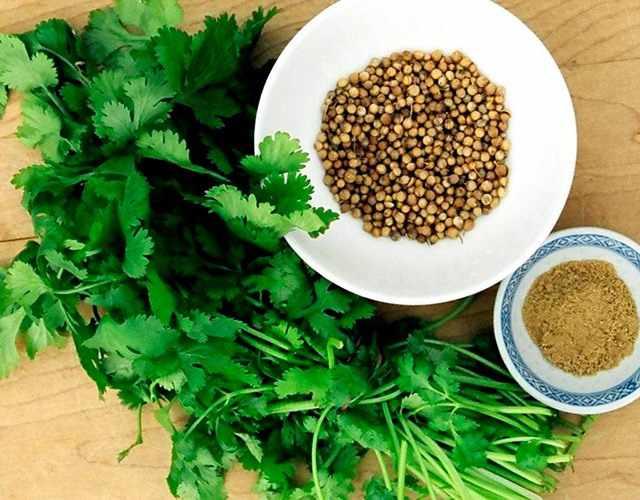 Листья и семена кориандра