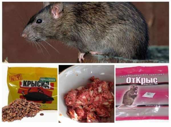 Даже если крысы еще не навестили курятник, есть резон приобрести и заранее заложить крысиный яд