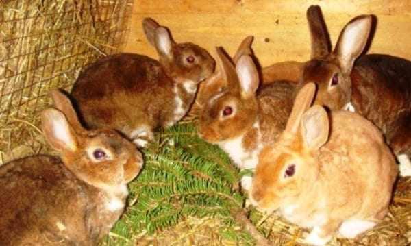 Еда животных зимой должна быть калорийной и витаминной