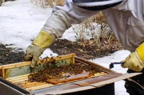 Почему важна зимняя подкормка пчел?