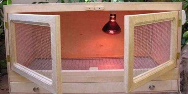 Конструкция брудера для птенцов