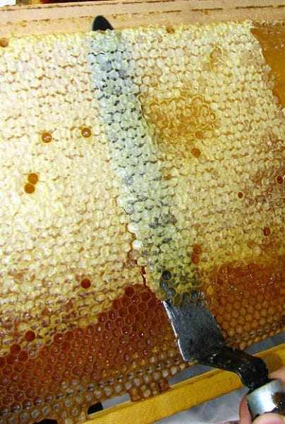 Что такое забрус в пчеловодстве: лечебные свойства