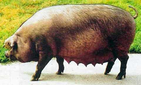 Уржумская мясная