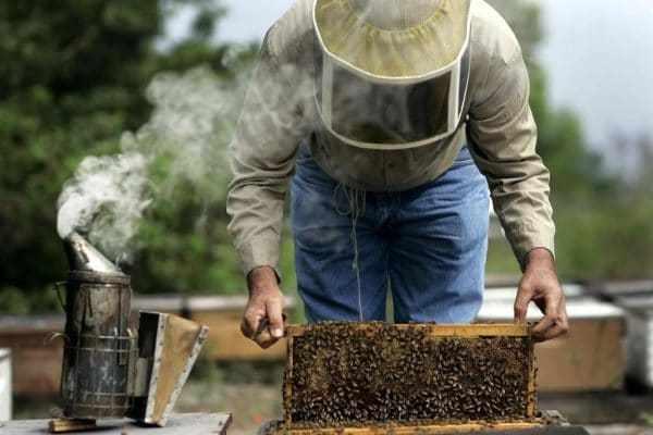 Работа с пчелами в августе: основные этапы, подкормка, уход, что делать пчеловоду