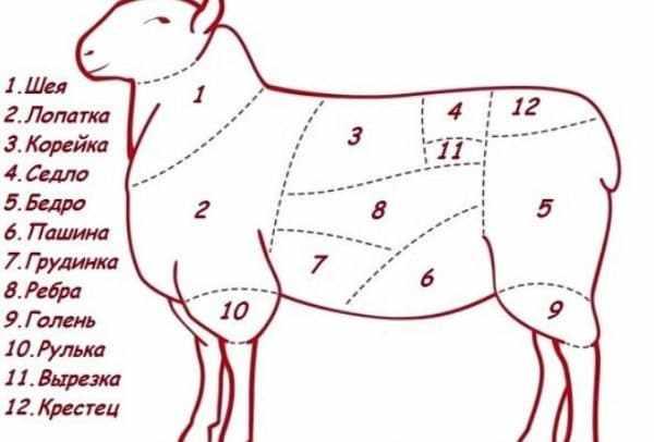 Как разделать барана правильно
