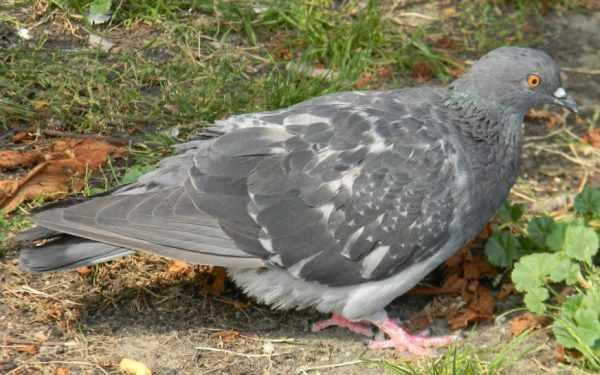 Если птица заболела, важно начать лечение на ранних стадиях болезни