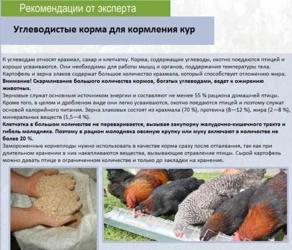 Рекомендации от эксперта по кормлению кур