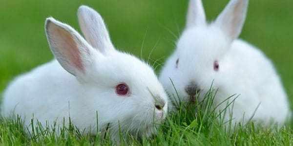 Сколько живут кролики?