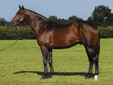 Самая быстрая порода лошадей в мире, разновидности скакунов, их параметры и характеристики