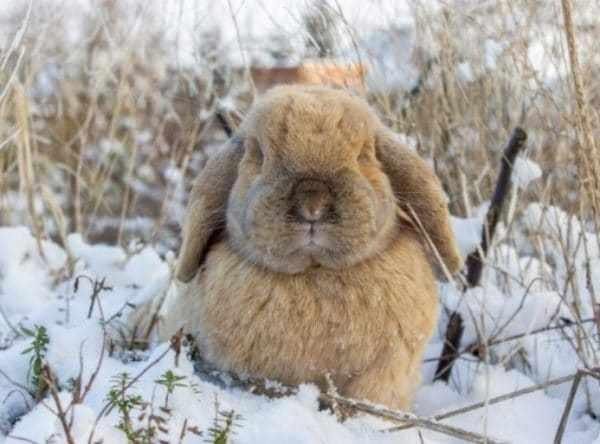 Оптимальной температурой для содержания кролиководы со стажем называют показатели от +10 до +18 °С