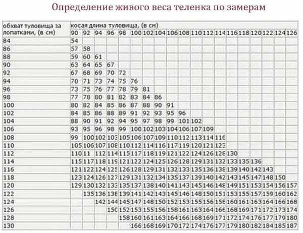 Как определить вес коровы (быка) при помощи таблиц