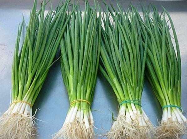 В хозяйстве есть возможность частично заменить аптечные витамины натуральными. Самой доступной травой в любой сезон является зеленый лук.